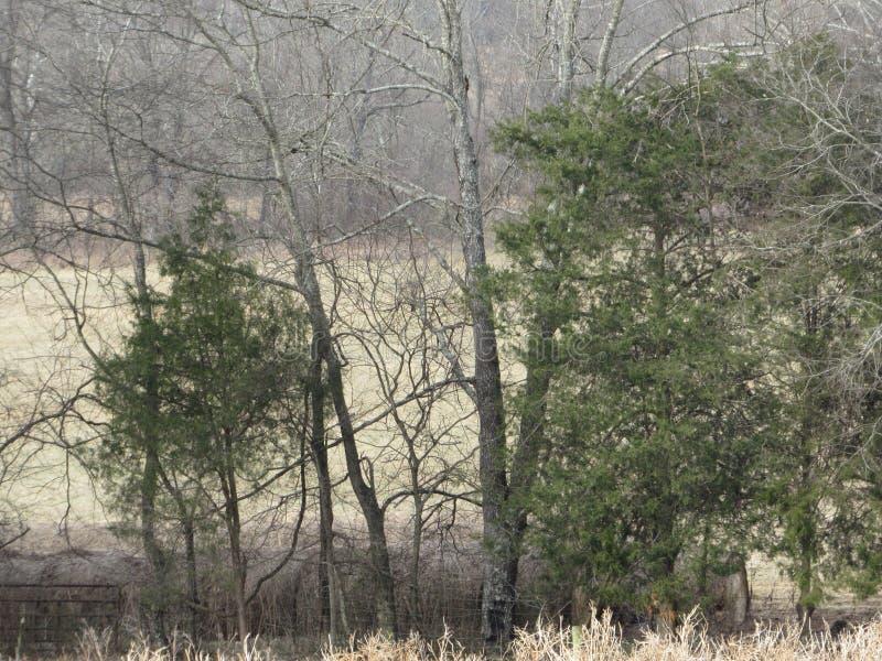 Arbres nus en hiver photographie stock