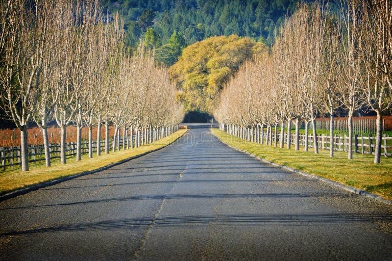 Arbres nus, route de campagne de vin, la Californie photos libres de droits