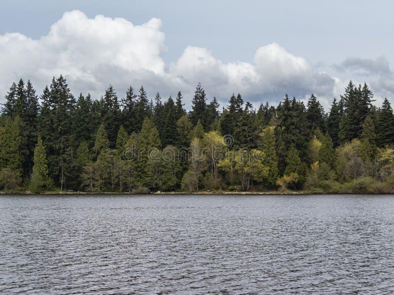 Arbres par le bord de lac de la lagune perdue au parc de Stanley à Vancouver images libres de droits