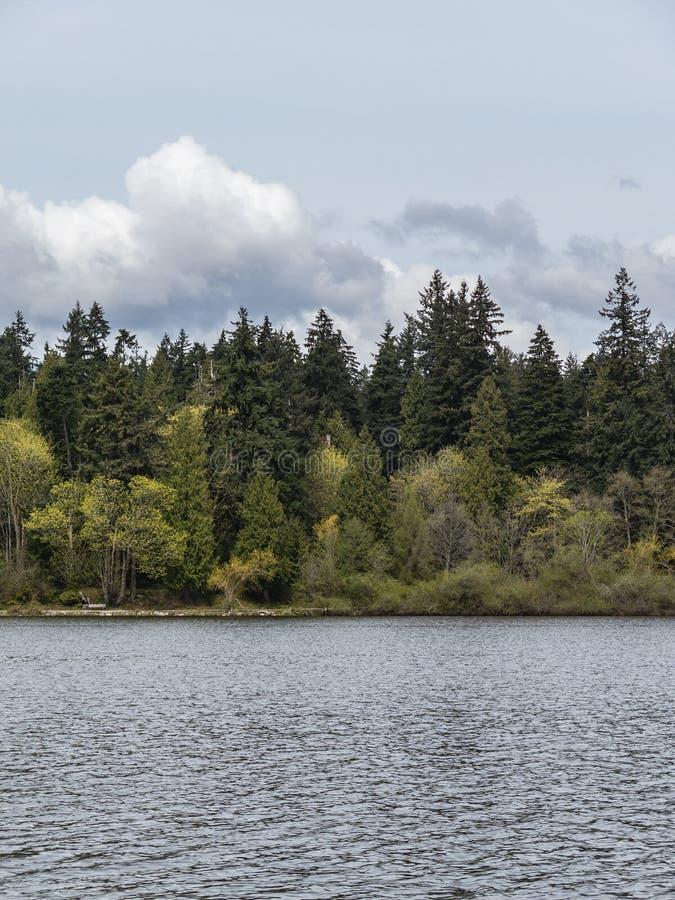 Arbres par le bord de lac de la lagune perdue au parc de Stanley à Vancouver photographie stock