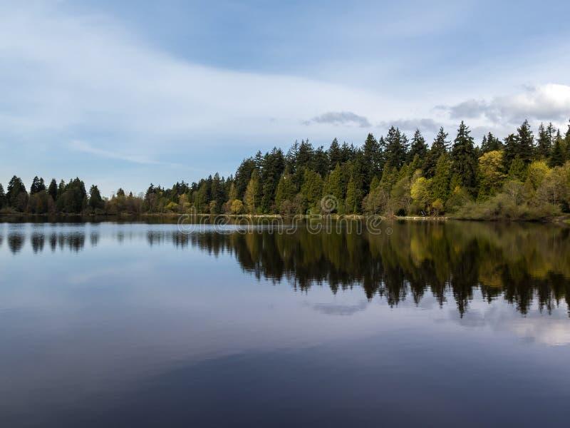 Arbres par le bord de lac se reflétant dans la lagune perdue au parc de Stanley à Vancouver images stock