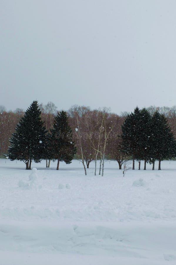 Arbres pendant le jour de temps de chute de neige importante photographie stock