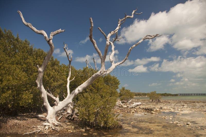 arbres principaux de la Floride de plage photos stock