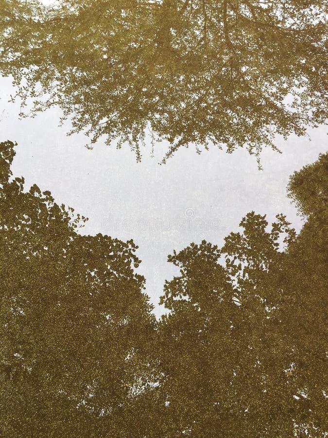 Arbres reflétés image stock