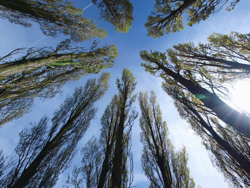Arbres regardant vers le ciel photographie stock libre de droits