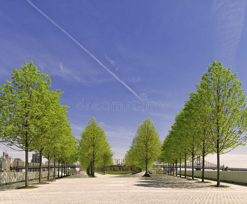 Arbres, Roosevelt Island Park, New York City images libres de droits