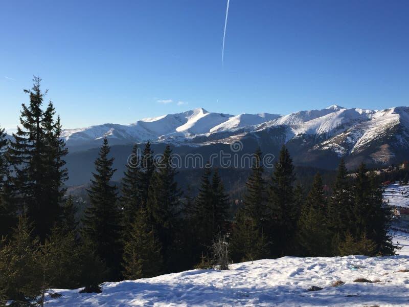 Arbres Roumanie de skii de neige de montagne image libre de droits