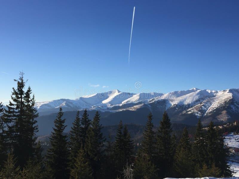 Arbres Roumanie de skii de neige de montagne photos libres de droits