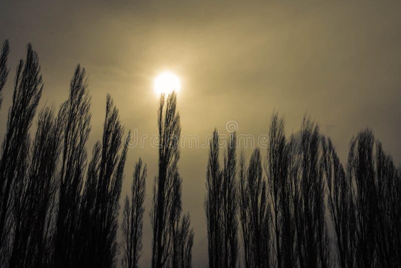 Arbres s'élevant au soleil photo libre de droits