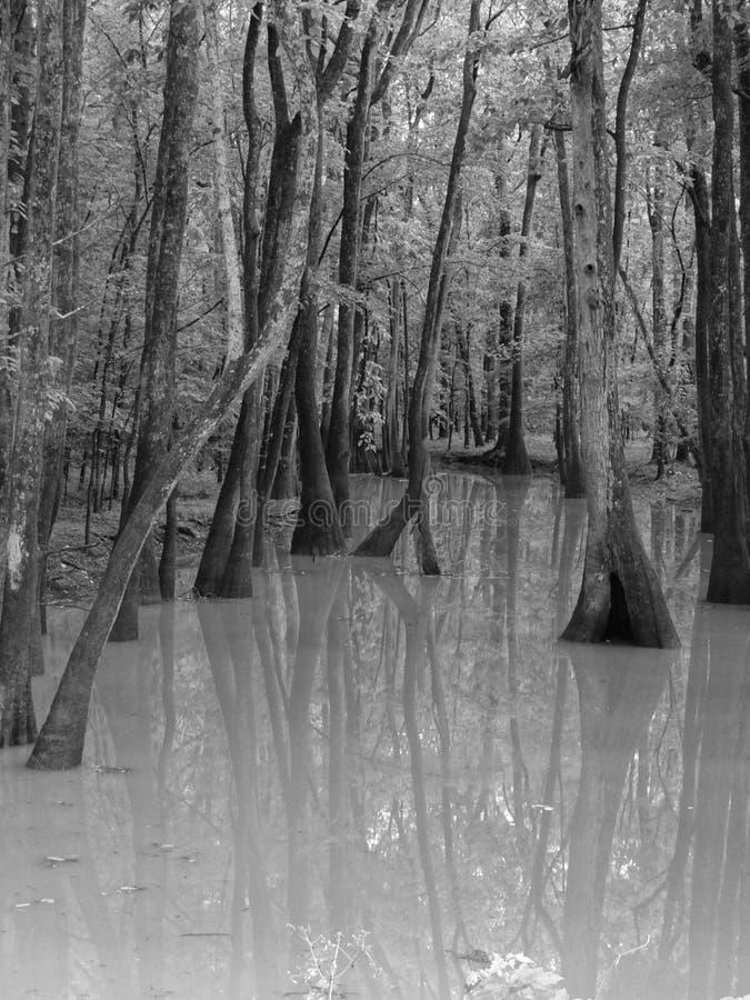 Arbres s'élevant dans l'eau images stock