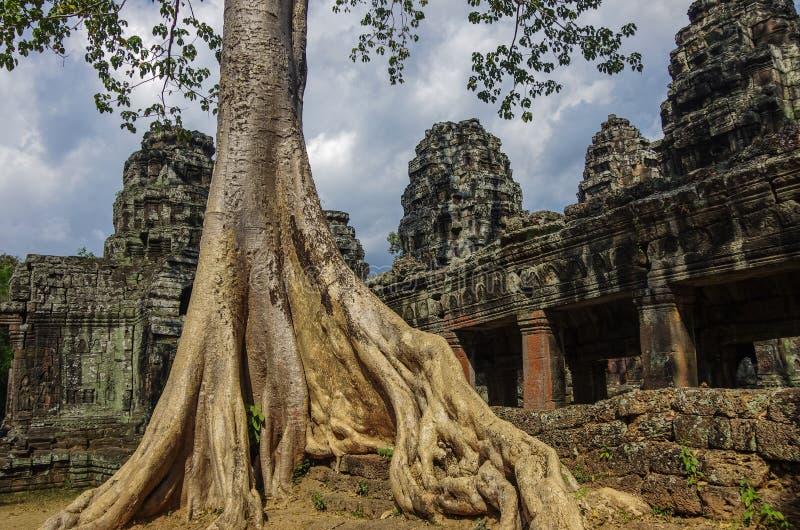 Arbres s'élevant par les ruines du temple de Prohm de ventres chez Angkor Vat photographie stock libre de droits