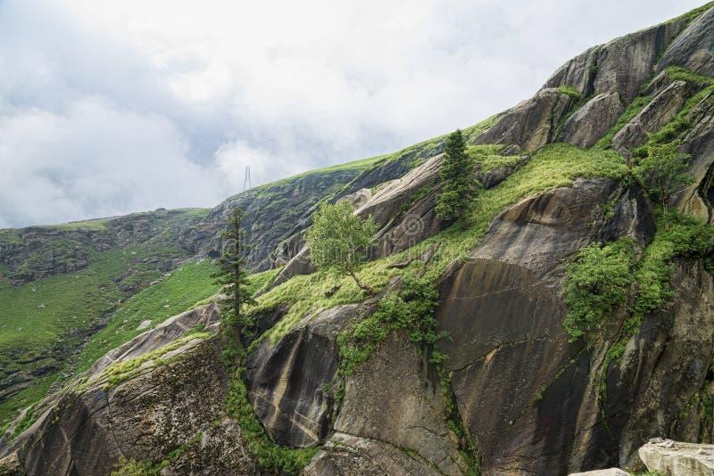 Arbres s'élevant sur des roches photo libre de droits