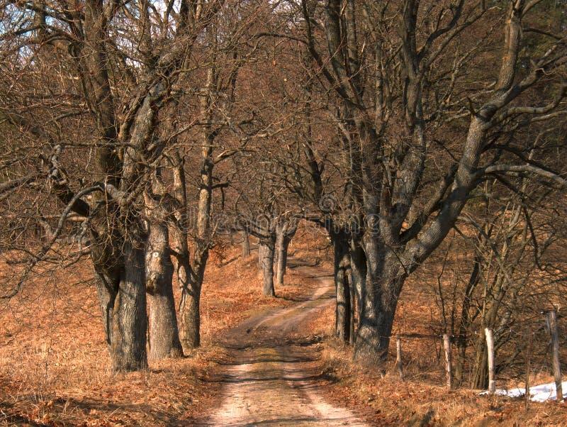 Arbres sans feuilles image libre de droits