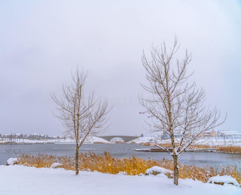 Arbres sans feuilles contre le lac Oquirrh en hiver images stock
