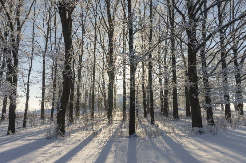 Arbres sans feuilles en terre couverte par neige photos stock
