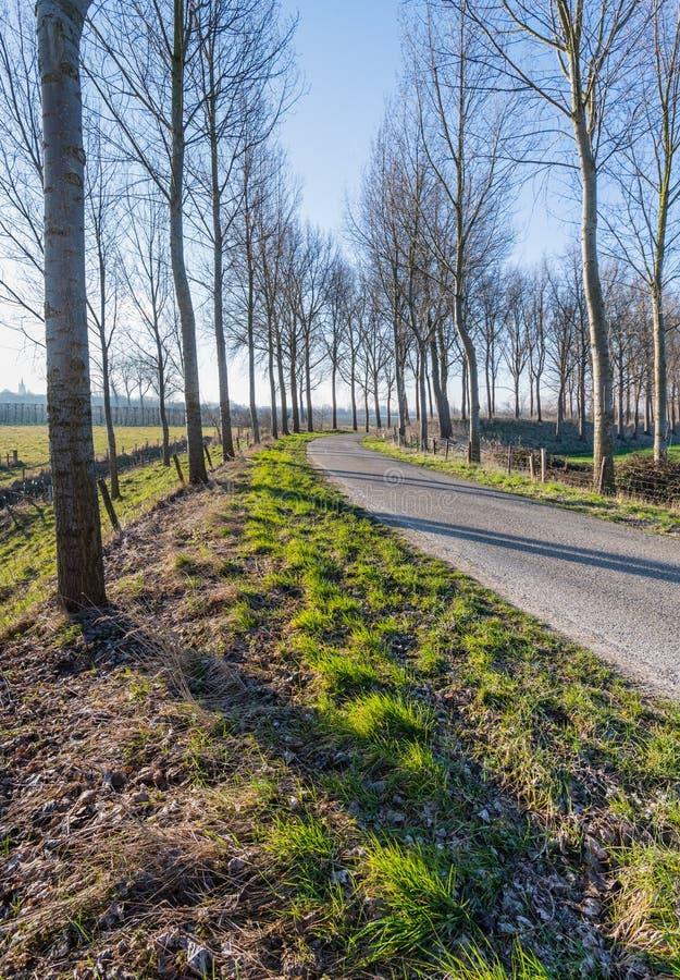 Arbres sans feuilles sur les deux c t s d 39 une route de - Arbres sans feuilles ...