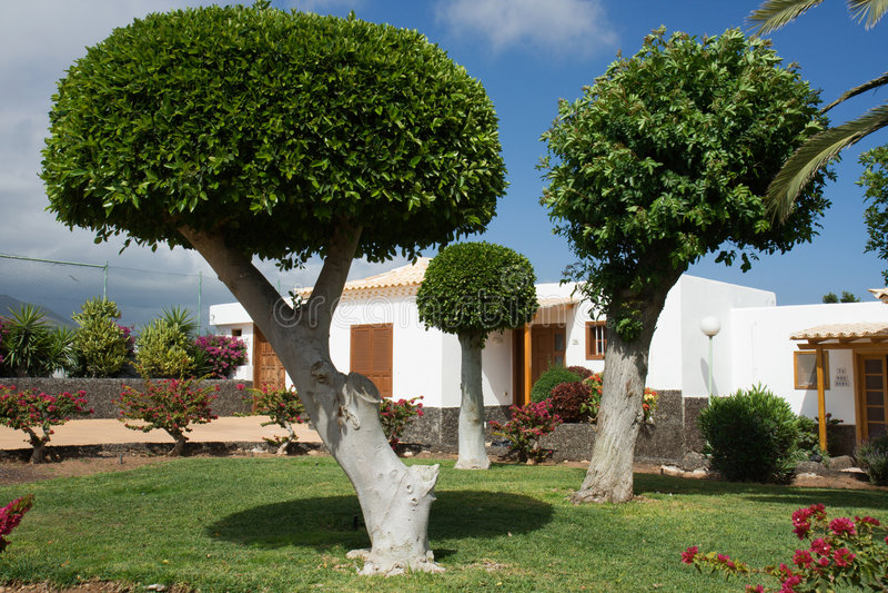 Arbres Sculpted dans un jardin image stock