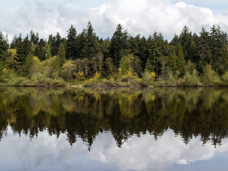 Arbres se reflétant dans la lagune perdue au parc de Stanley à Vancouver photographie stock