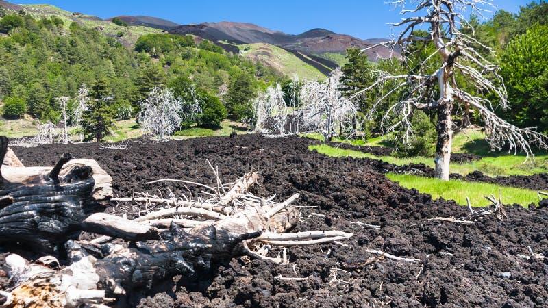 Arbres secs dans l'écoulement de lave durci sur l'Etna image stock