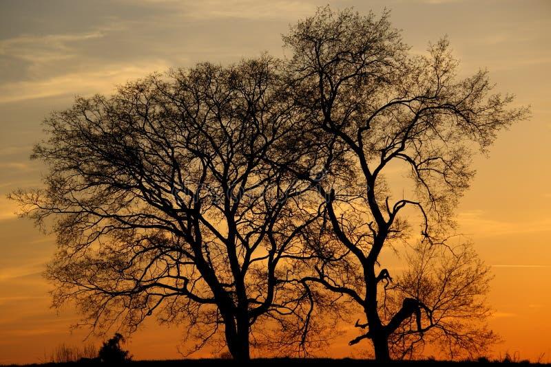 Arbres silhouettés une belle soirée image libre de droits