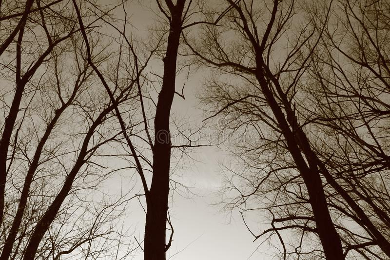 Arbres, silhouettes des arbres photos libres de droits
