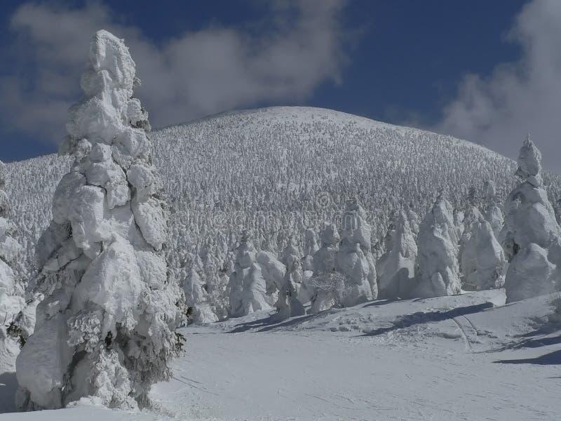 Arbres Snow-covered sur la pente de montagne photographie stock
