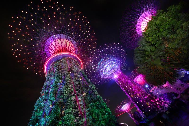 Arbres superbes aux jardins par le compartiment, Singapour images libres de droits