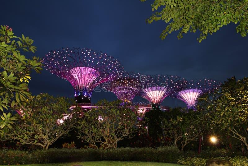 Arbres superbes aux jardins par le compartiment, Singapour photographie stock