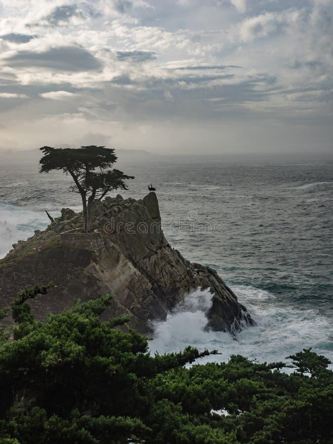 Arbres superficiels par les agents de Monterey Cypress à la côte photographie stock