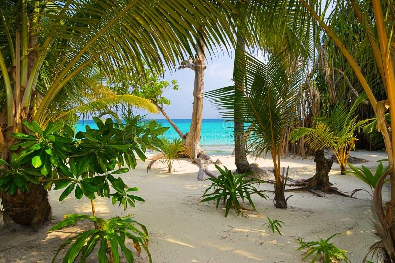 Arbres sur la plage tropicale image libre de droits