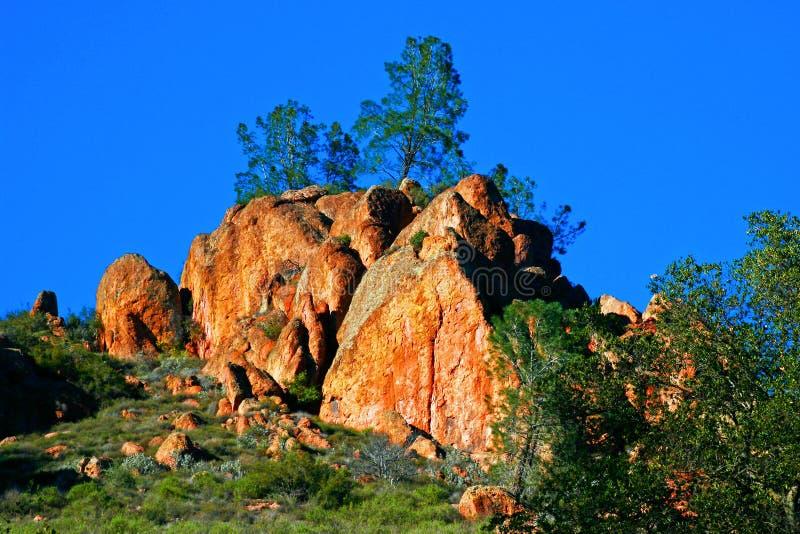 Arbres sur la roche aux sommets NP photographie stock