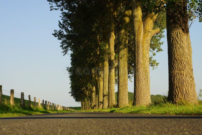 Download Arbres Sur Le Bord De La Route Photo stock - Image du hêtre, timber: 77152218