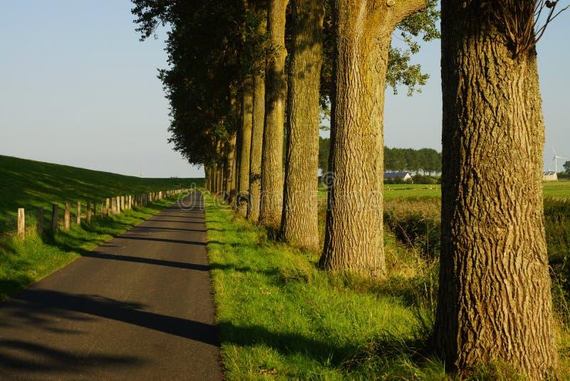 Download Arbres Sur Le Bord De La Route Photo stock - Image du hêtre, route: 77152266