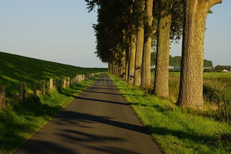 Download Arbres Sur Le Bord De La Route Photo stock - Image du route, écorce: 77153232