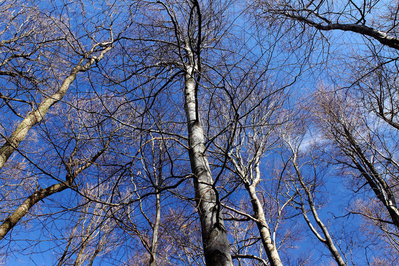 Arbres sur le ciel bleu images stock