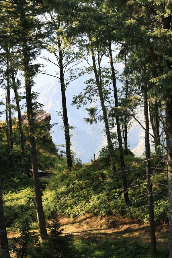 Arbres sur les Alpes d'Apuan dans Versilia À l'arrière-plan le bâti photographie stock
