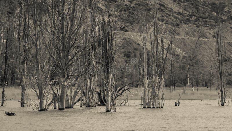arbres sur mon eau photographie stock libre de droits