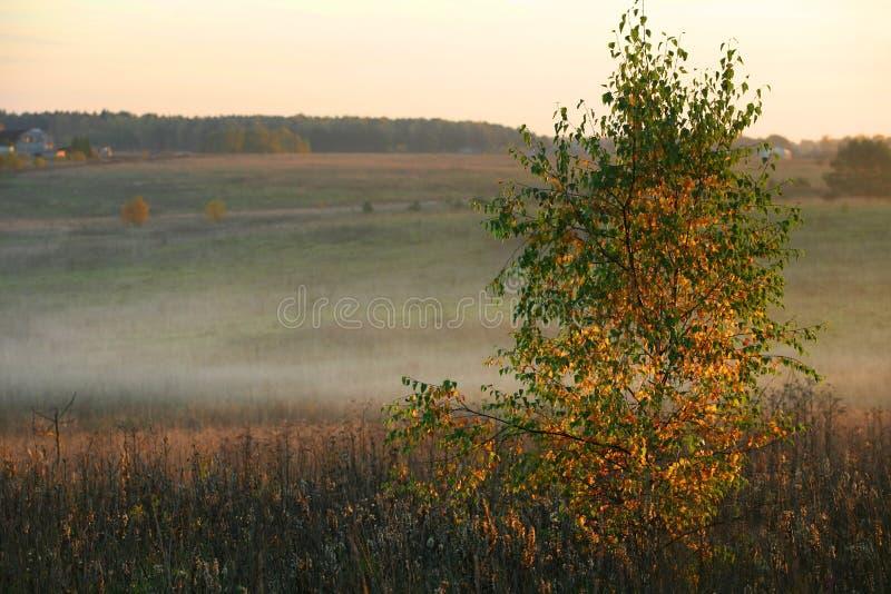 Arbres sur un coucher du soleil photos stock
