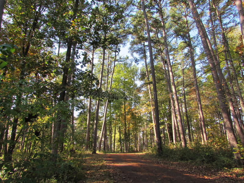 Arbres tôt d'Autumn Dirt Pathway Through Tall photo stock