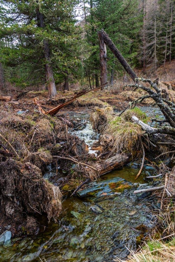 Arbres tombés dans le cours supérieur de la rivière petit Yaloman dans Altai photo libre de droits
