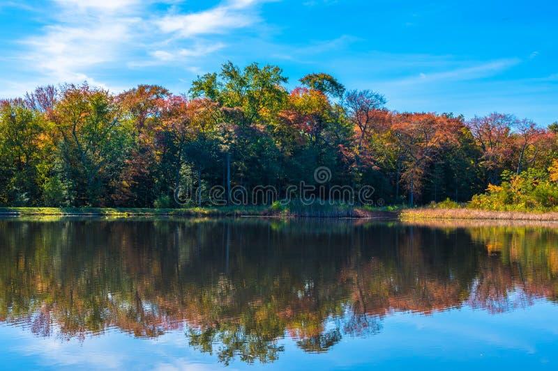 Arbres tournant des couleurs en automne image libre de droits