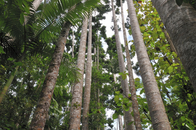 Arbres tropicaux photos libres de droits