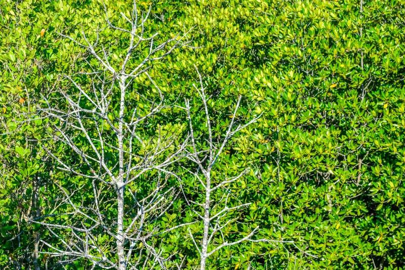 Arbres tropicaux photographie stock