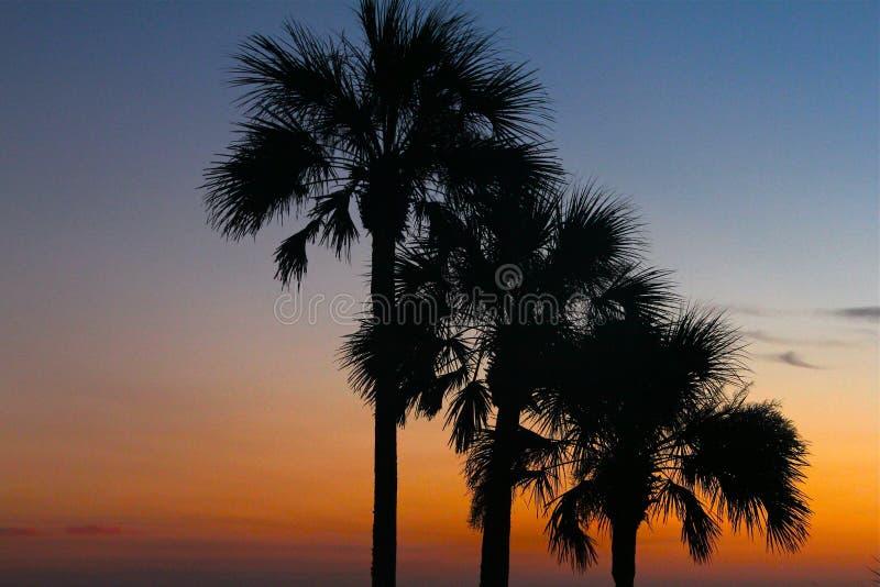 Arbres tropicaux d'aube photographie stock libre de droits