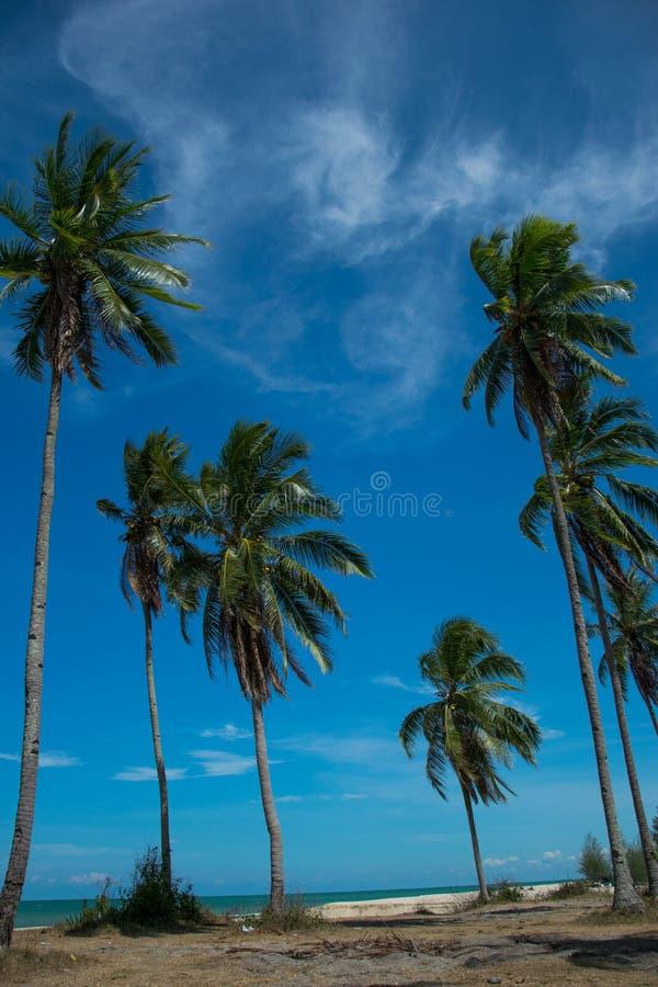 Arbres tropicaux de plage et de noix de coco images libres de droits