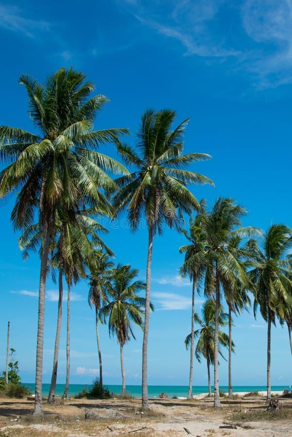 Arbres tropicaux de plage et de noix de coco image libre de droits
