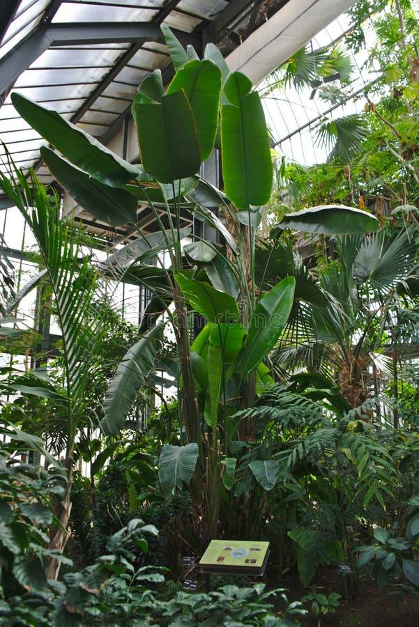 Arbres tropicaux des serres chaudes du ` de la tete d de parc ou à Lyon photographie stock libre de droits