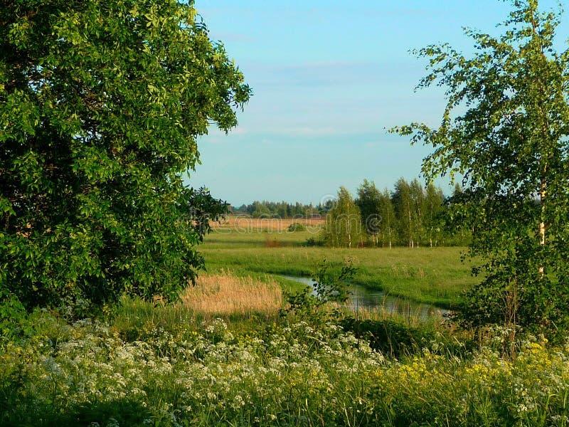 arbres Ukraine d'été de fleuve d'horizontal photos stock