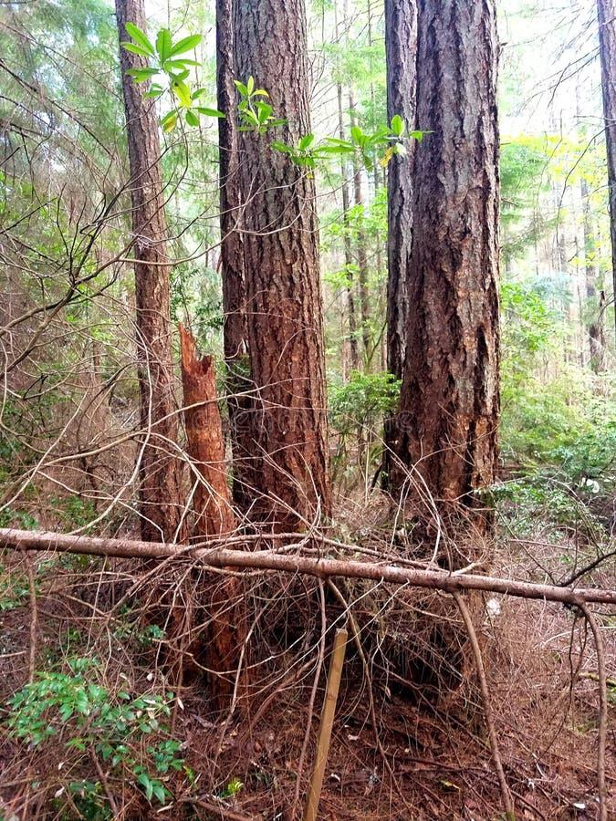 4 arbres un tronçon photo stock