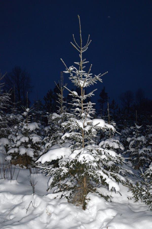 Arbres une nuit neigeuse d'hiver photos stock